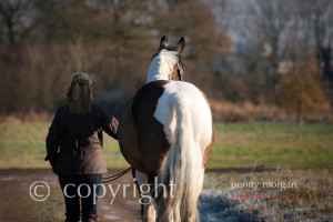 Equestrian-Images-13