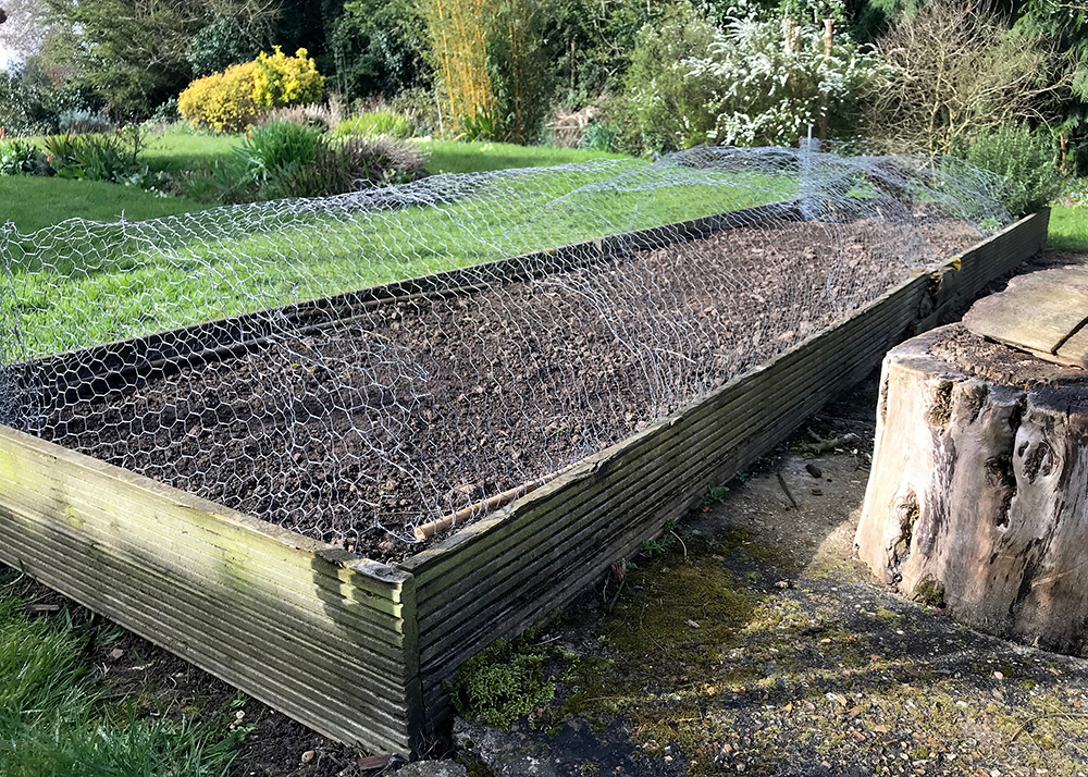 Prepared vegetable patch