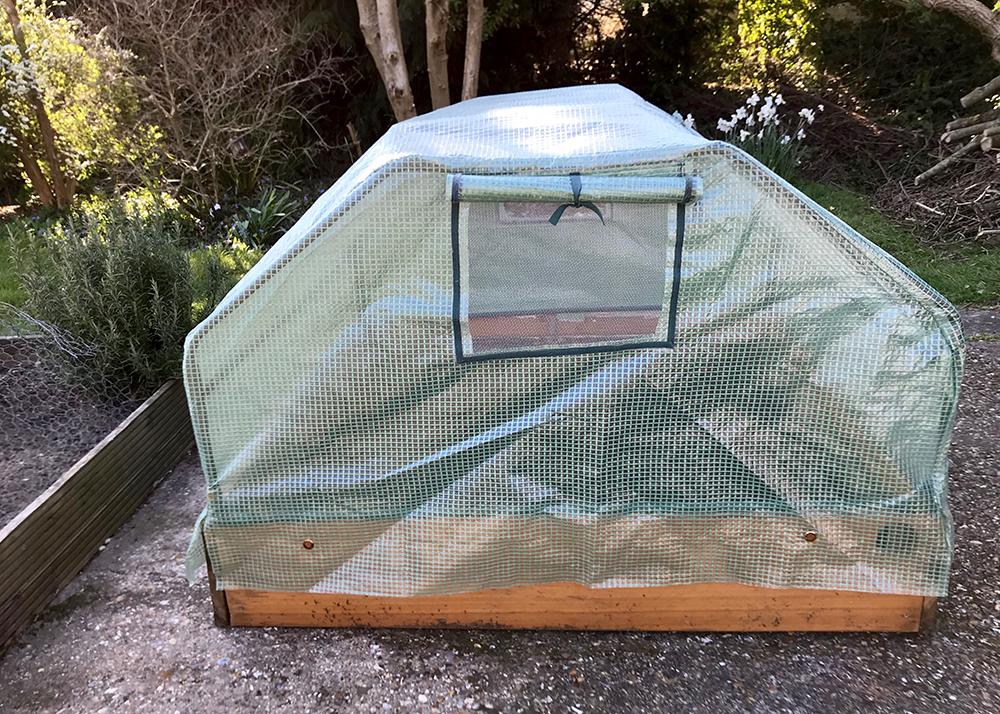 cloche, lettuce, plants, greenhouse