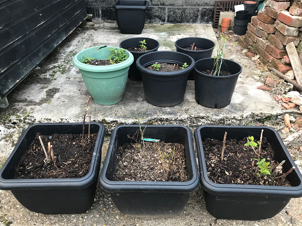 raspberries, blueberries, courgettes, containers, fruit, vegetables,