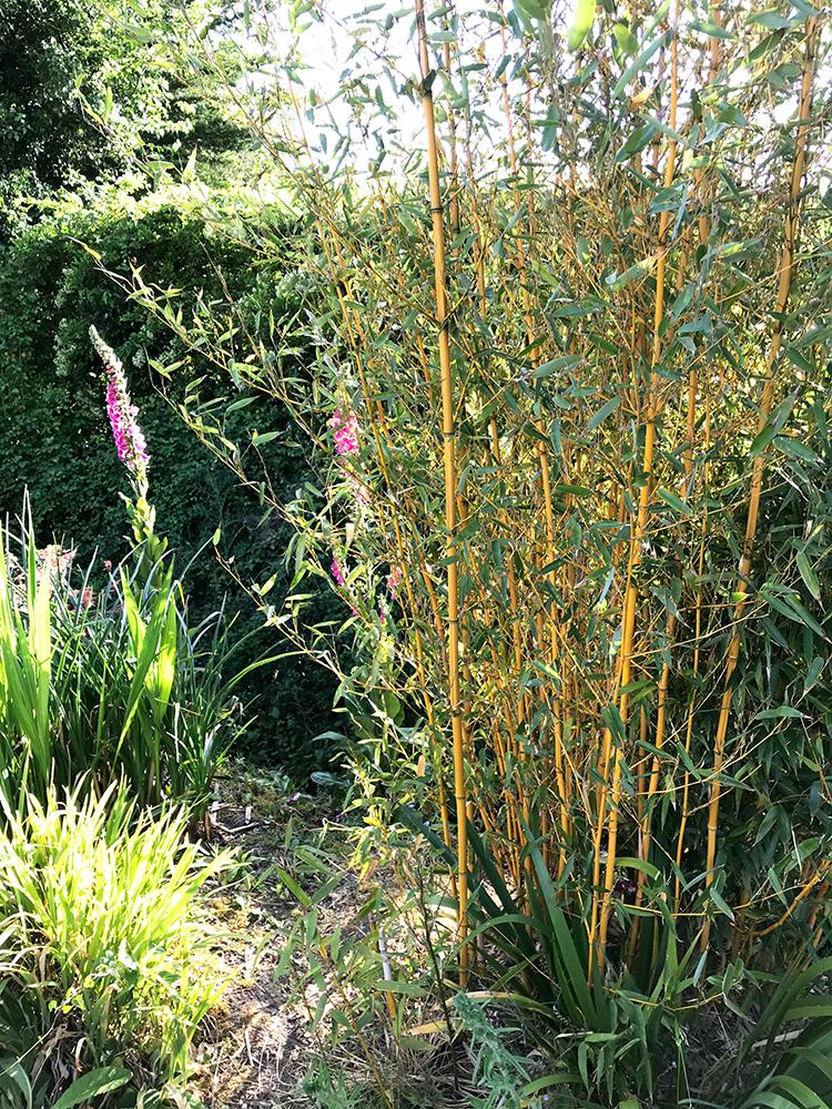bamboo, canes, stakes, garden,