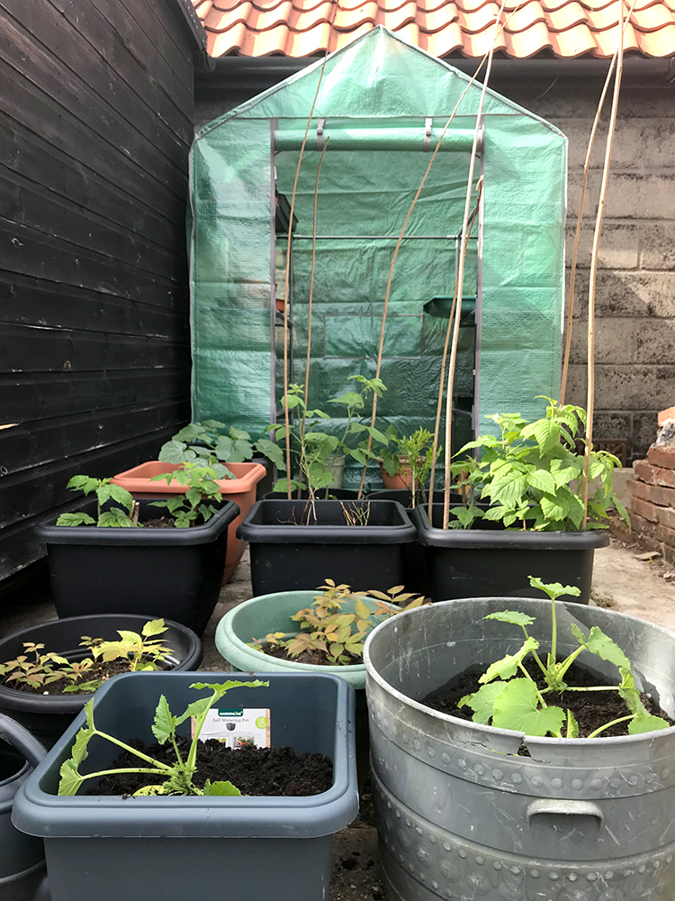 vegetables, fruit, greenhouse, grow your own, pots