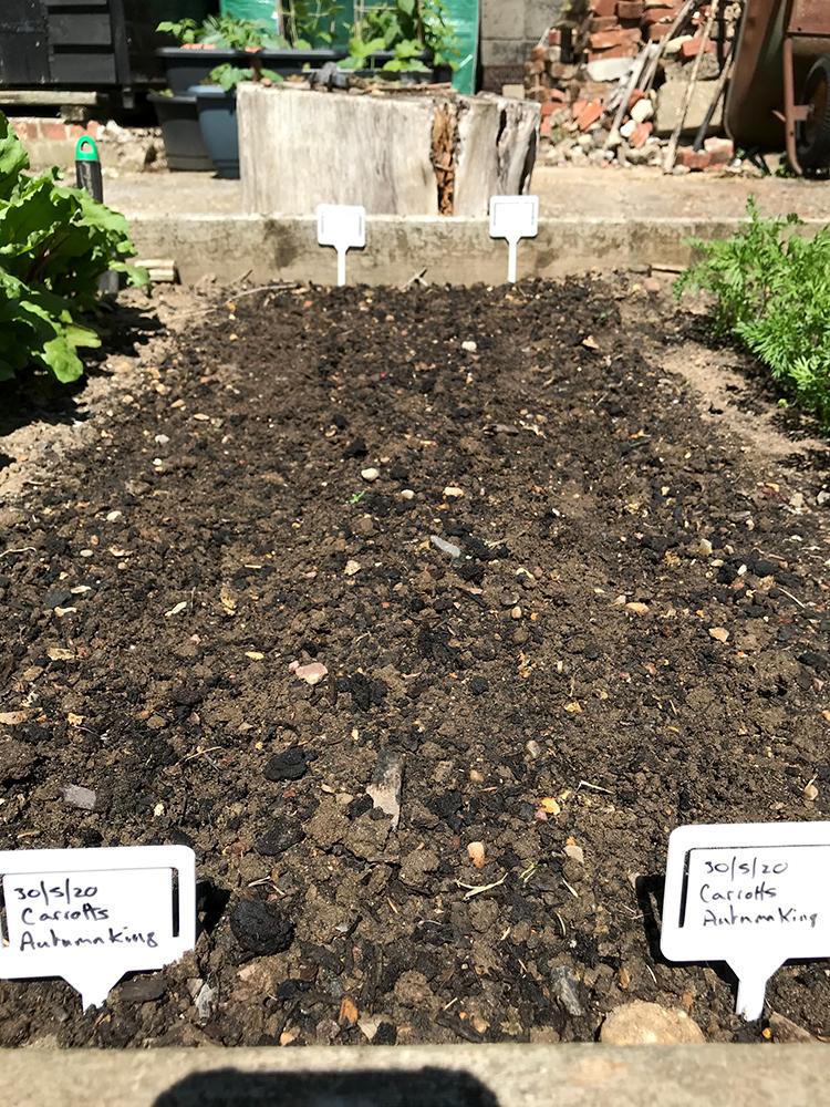carrots seeds, vegetables, home grown, planting,